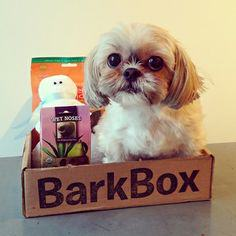 bark box with dog treats and dog